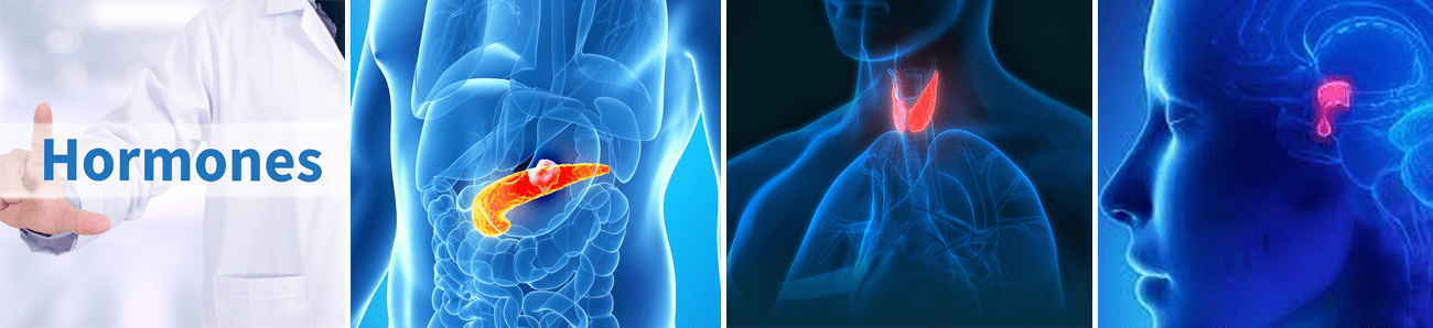 International Journal of Endocrinology Sciences